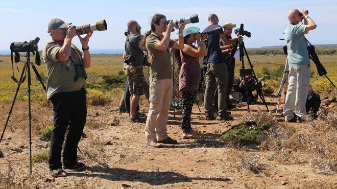Festival Observação Aves Sagres