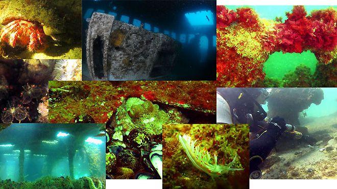 LakaLaka Diving&#10Local: Lagos&#10Foto: LakaLaka Diving