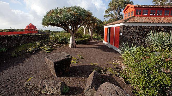 Museu do Vinho - Pico&#10Luogo: Pico&#10Photo: Carlos Duarte -Turismo dos Açores