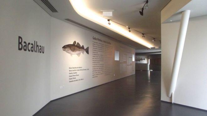 Museu Marítimo de Ílhavo_ Aquário dos Bacalhaus&#10Lugar Museu Marítimo de Ílhavo_ Aquário dos Bacalhaus &#10Foto: Museu Marítimo de Ílhavo