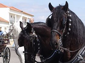 National Horse Fair