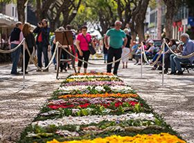 马德拉鲜花节