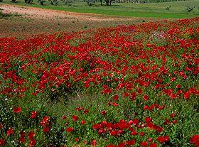 Páscoa em Portugal