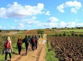 Through the Route of Wine and Vineyards