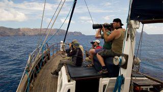 Espécies raras na Madeira&#10Lugar Ilhas Desertas&#10Foto: Ventura