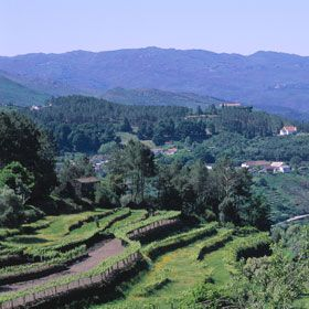 Soajo