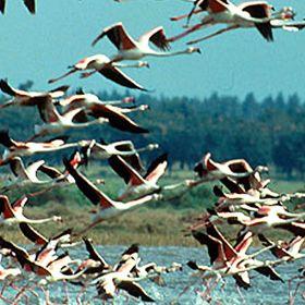 Reserva Natural do Estuário do Tejo