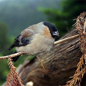 Centro Ambiental do PrioloPhoto: Veraçor - Turismo dos Açores