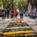 Festa da Flor&#10Local: Funchal&#10Foto: Francisco Correia