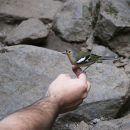 My Guide Madeira&#10Ort: Porto Moniz / Madeira&#10Foto: My Guide Madeira