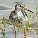 Birdwatching&#10Foto: Carvalho Pereira