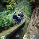 Levada&#10Place: Madeira&#10Photo: Turismo da Madeira