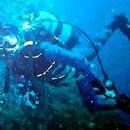 Espírito Azul - Mergulho e Atividades Marítimo-Turísticas, Ldª.
