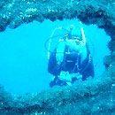 Tubarão Madeira Mergulho