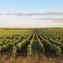 Have a Wine Day Private Tours