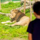 Zoo Santo Inácio&#10場所: Vila Nova de Gaia