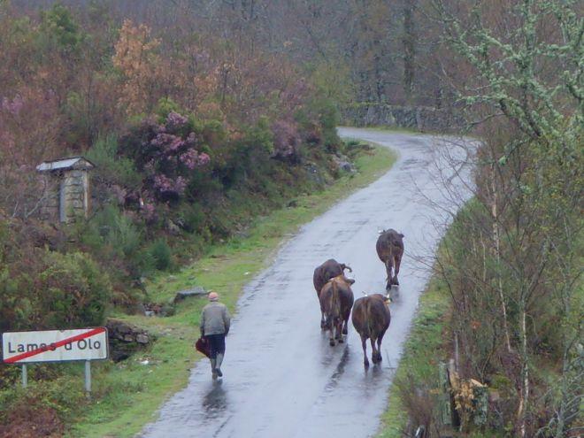 Lamas de Olo-Tras os Montes