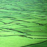 Green fields with cows場所: Ilha Terceira nos Açores写真: Rui Cunha